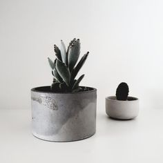 FUME Products crafts quality soy wax candles, concrete homewares and ceramics from Okura, Auckland, NZ. Soy Wax Candles, Candle Wax, Concrete, Planter Pots, Plates, Ceramics, Products, Licence Plates, Dishes