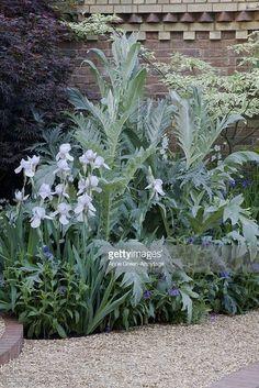 corner-of-walled-garden-cardoon-iris-sibirica-alba-and-perennial-picture-id130793085 (683×1024)