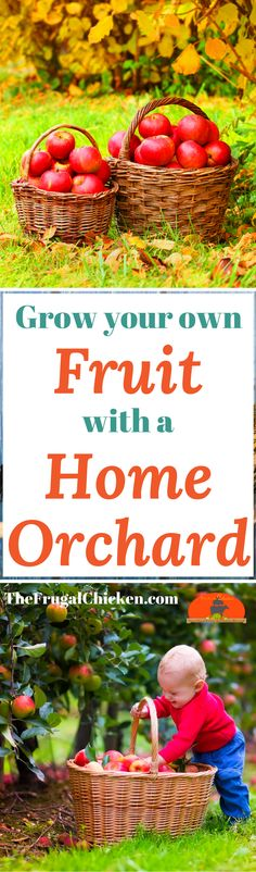 You CAN grow fruit in your backyard - with dwarf fruit trees! Here's how to plant an orchard that will give you food for years!