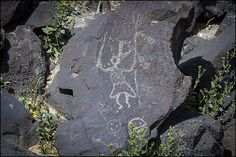 petroglyph national monument - Yahoo Image Search Results