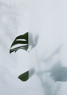 Kristina Dam Studio - Split-leaf Philodendron I Leaf Wall Art, Illustration Art, Illustrations, Nature Plants, Foliage Plants, Green Nature, Life Photography, Shadow Photography, Floral Photography