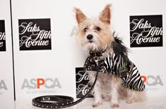Sophie, wearing her The Cher coat, in the holiday spirit at an event for the ASPCA at Saks. #CouturebySophie #GoFaux