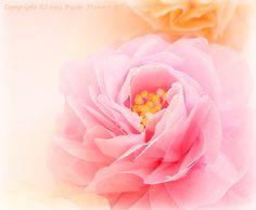 お花紙のバラ,前田京子,ペーパーフラワー