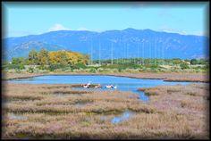 Laguna di Nora #fenicotteri #pula #nora #sardegna #sudsardegna #pula #laguna #tourism #lantanalovers #lantanaresort