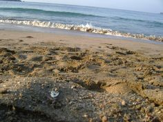 Mexico - beach on the western side of Mexico.  My parents used to take us camping on some remote beach in Mexico. :)