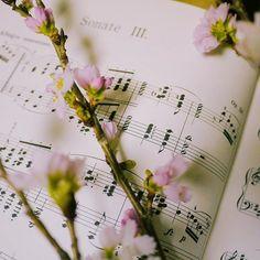 【saisons.s】さんのInstagramをピンしています。 《* 遅ればせながら あけましておめでとうございます😊 * こちらのアカウント まだはじまったばかりというか、投稿もあんまりできていませんが、昨年に続き、よろしくお願いします💕 * 去年のピアノは特にショパンのバラ4を弾き続けてきて、これからも弾いて弾いて、仲良くしていきたい大好きな曲ですが😊 * 今年新たに挑戦したい曲の1つは 絶対に難しいショパンのソナタ3番✨2番と迷いましたが💭2番は今までもそうでしたが、ちょこちょこ弾きたいときに😋 * 3番は私に弾けるんかいなと思いますけれど、弾いちゃえ!という勢い🙃譜読みはじめました😋 * 前に弾きたい曲弾くには寿命が足りなさそう…というお話になったときに、本当にそうだと。。 * ピアノができる時間は限られてるし、新しい曲何曲もこなす技量がないので、一生かけて仲良くしていきたい曲を丁寧に練習して、1年後弾けるようになって、さらにずっと深めていけると良いです😊…