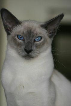 Sylvester..born on 25-05-2012