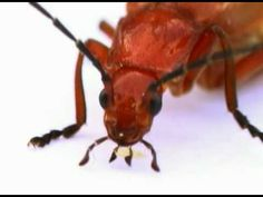 Icky, Icky Insects music video --fun and perfect for 1st grade science connection
