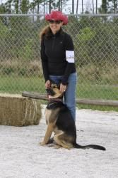 Bruno is an adoptable German Shepherd Dog Dog in Denver, CO.  Bruno is from the Bahamas he arrived in a snow storm! Isn't he handsome? He was rescued by the Humane Society of Grand Bahama when he w...