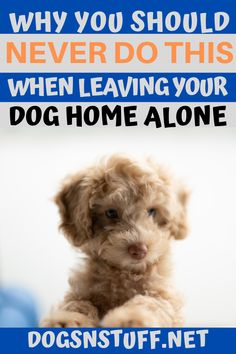 You think you might be ready to welcome a new furry friend into your home but how do you figure out what kind of pet is right for you? Take this quiz and find out! Big Dog Little Dog, Big Dogs, Cute Dogs, Dogs And Puppies, Wild Animals Pictures, Dog Anxiety, Pet Fox, Dog Rules, Dog Hacks