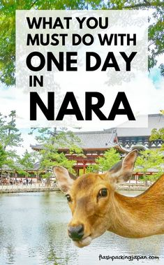 Japan travel tips. Travel Nara Japan Kyoto with Nara itinerary: Perfect one day in Nara Japan. Best places to visit. Best things to do. Day trip from Kyoto. Day trip from Osaka. Backpacking Japan travel destinations itinerary trip planning tips. Hiroshima, Nagasaki, Japan Travel Guide, Asia Travel, Travel Trip, Travel Plane, Traveling Europe, Travel Party, Thailand Travel