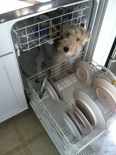 Oops!  All three of ours have been in the dishwasher!
