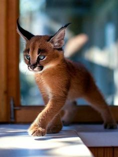 Cat Wallpaper 500 Ideas On Pinterest Cats And Kittens Crazy Cats Cute Cats