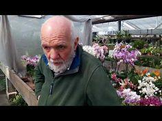 Come e dove posizionare le orchidee in casa - YouTube