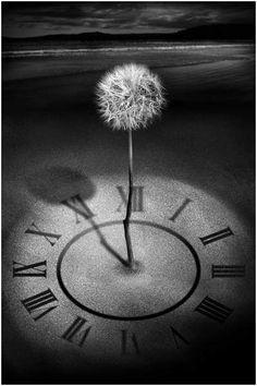 Eleventh Hour :: Artist Felicity Rogers   just as this flower out life is here one second and gone the next our life here is but a vapor.