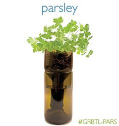 Parsley Grow Bottle by Potting Shed Creations is the ideal way to grow fresh herbs in your kitchen Grow Organic, Organic Herbs, Organic Gardening, Indoor Gardening, Indoor Plants, Gardening Tips, Garden Terrarium, Garden Plants, Herb Garden