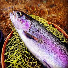 Trout Fishing, Fly Fishing, Fishing Photography, Fish Art, Usa, Instagram, Fly Tying, Camping Tips, U.s. States