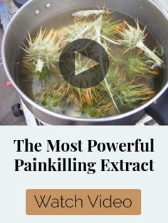 Natural Headache Remedies Ancient Survival Medicine That We Lost To History Natural Headache Remedies, Natural Health Remedies, Holistic Remedies, Herbal Remedies, Natural Medicine, Herbal Medicine, Holistic Nutrition, Natural Healing, Herbalism