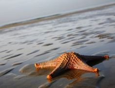 The Wadden Sea and a starfish