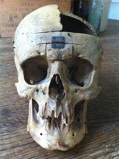 Real human skull. $749.99