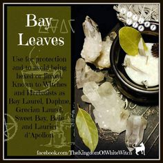 Bay leaves in witchcraft Magic Herbs, Herbal Magic, Green Witchcraft, Wicca Witchcraft, Witch Herbs, Under Your Spell, Hedge Witch, Kitchen Witchery, Witches Brew