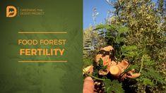 Food Forest Fertility