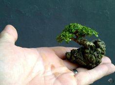 Mini bonsai sobre roca                                                                                                                                                      Más