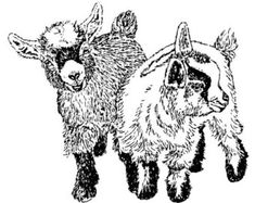 Two Pygmy Goat Kids, Rubber Stamp C