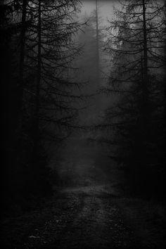""" Photo by eberhard grossgasteiger on Unsplash "" Dark Green Aesthetic, Night Aesthetic, Dark Photography, Black And White Photography, Dark Landscape, Forest Scenery, Dark Forest, Dark Places, Dark Wallpaper"