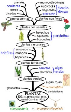 The different types of plants in the world Planta Vascular, Vascular Plant, Evolution Of Plants, Types Of Air Plants, Snake In The Grass, Plant Cell, Parts Of A Flower, Plant Science, Plant Species