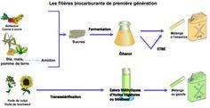 Formation du biocarburant
