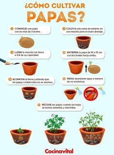 Excellent Veg garden info are offered on our internet site. Eco Garden, Herb Garden Design, Garden Deco, Home Vegetable Garden, Edible Garden, Garden Plants, Growing Carrots, Plants Are Friends, Planting Vegetables