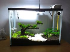 Simple but after growing bushy plants, will look like a swamp marsh