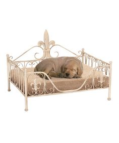 Look what I found on #zulily! Cream Fleur De Lis Frame Pet Bed #zulilyfinds