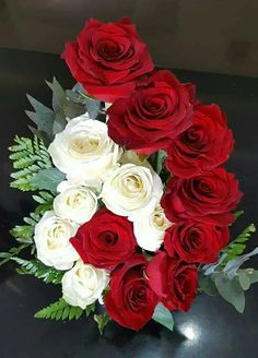 Glorious deep red and cream roses. Beautiful Rose Flowers, Love Rose, Beautiful Flowers, Cream Roses, White Roses, Attractive Wallpapers, Rose Arrangements, Rose Pictures, Special Flowers