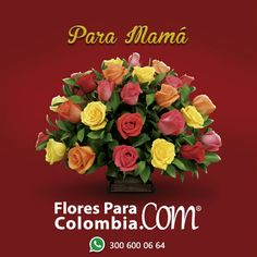 Www.floresParaColombia.com
