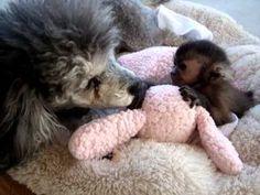 baby monkey gets a bath