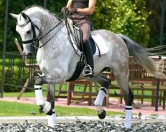 grey is my favorite color dressage