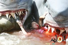 Great White Sharks Eating People