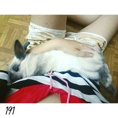 16.0409 DAY191 最近都可以輕易的讓我抱抱了 啊目沒有那麼可怕吧 Everyday baby hug my baby bunny  #nuomi #instaanimal #bunnylove #bunny #usagi#ウサギ#instabunny #rabbits #instarabbit #dailyflufffeature #侏儒兔 #兔  #rabbit #iganimal_snaps #iganimal#instacute#pets #happy_pet #taiwan #nuomi191 #191 #星期六 #糯米的睡腿記錄 by nuomi_1002