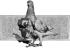 1024px-PSM_V88_D058_The_pigeon_spy_and_his_war_work.png (Obraz PNG, 1024×710pikseli)