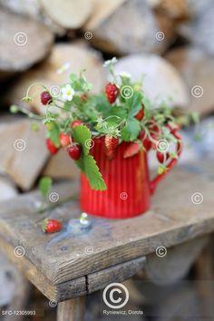 Lesní jahody v červeném hrnečku, Twigs strawberries in a red jug on a wood stool Fresh Fruit, Strawberry, Table Decorations, Cooking, Home Decor, Kitchen, Decoration Home, Room Decor, Strawberry Fruit