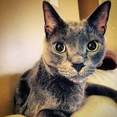 Moo Cat | Pawshake