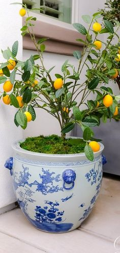 Blogger Randi Garrett Design styles Frontgate's Blue Ming Handpainted Ceramic Planters. Gardening For Beginners, Gardening Tips, Easy Garden, Ceramic Planters, Dream Garden, Plant Decor, Backyard Landscaping, Houseplants, Container Gardening
