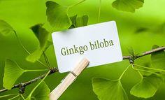The Untold Health Benefits of Ginkgo Biloba