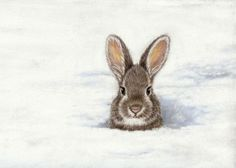 Bunny Art Print Peeking Out of the Snow 5 x 7 by SavageArtworks,
