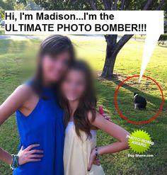 Hi! I'm Madison…I'm the ULTIMATE PHOTO BOMBER!