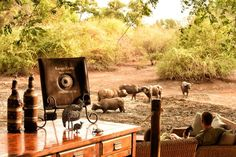If only every afternoon could be spent like this! African Bush Camp's Kanga Camp in Mana Pools National Park is home to the famous Armchair Safari. Relax in this luxury tented camp while the wildlife comes to you. Highlands, Safari, Luxury Tents, Tent Camping, Wilderness, Wildlife, Relax, African, Pools