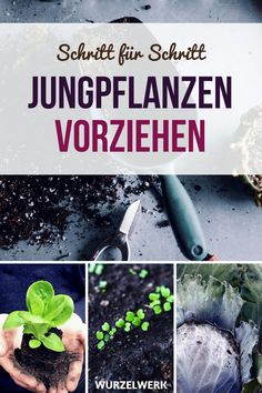 Jungpflanzen im Haus vorziehen - Wurzelwerk Prefer young plants in the house: Whether on the windowsill, in the greenhouse or with professional plant lights: Here is a guide to sowing and pricking out