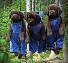 cute country pups